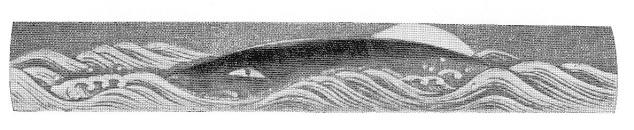 whale9